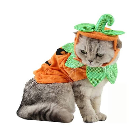 pumpkin pals cat costume