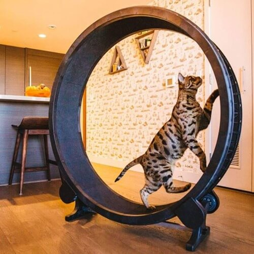 Best Cat Wheel